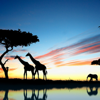 African landscape with giraffes and an elephant