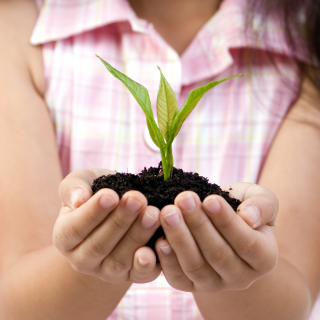 Young girl holding a small plant